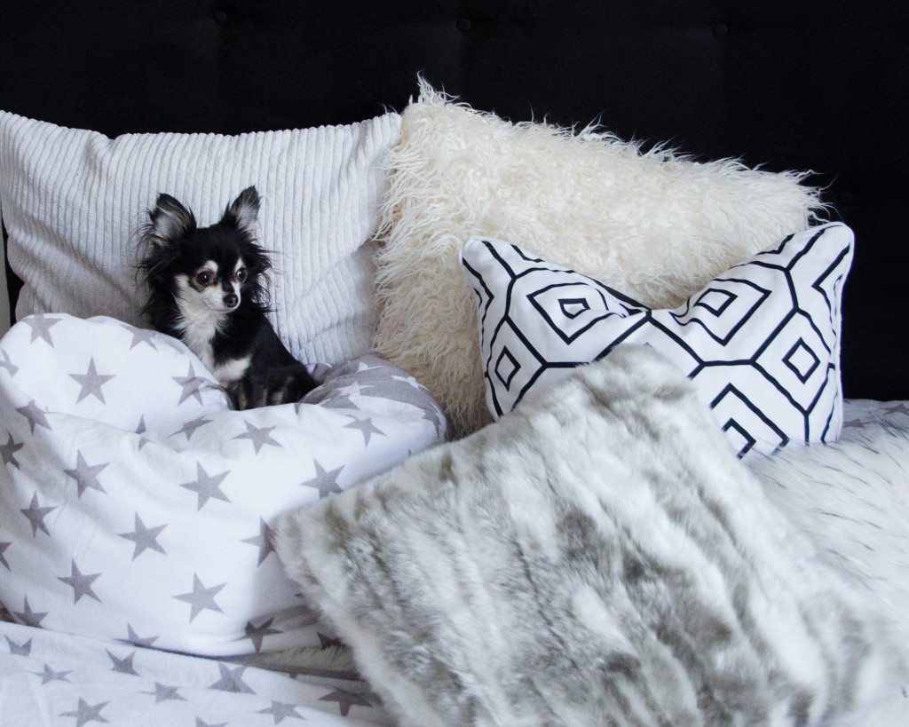 while playing dog sitter caterina catalano 39 s fashion blog and website. Black Bedroom Furniture Sets. Home Design Ideas